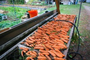 carrots (1 of 6)